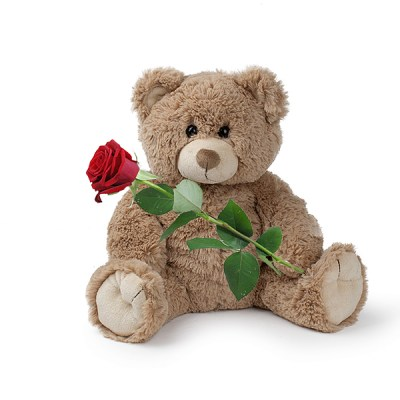 brown teddy and rose