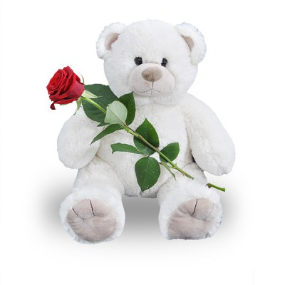 white teddy and rose